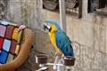 Medusa Cam Eserler Müzesi Papağan-3