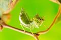Mantis lunch