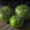 Three Green Tomatoes