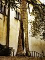 Amazing Split Tree