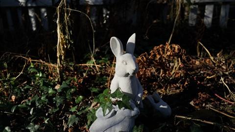 FF Rabbitt (3000x1688)