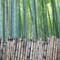 2015-03-18 Japan Kyoto Arashiyama Bamboo Forest 1