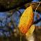 Don't Fall in Fall