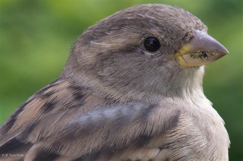 Sparrow-Moineau-Takumar_SMC_150mm-1