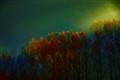 _DSC2724sunlight thru mist