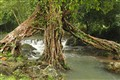 riverand tree