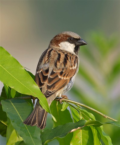 24 oct 2011 sparrow 1