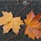 Leica likes leaves