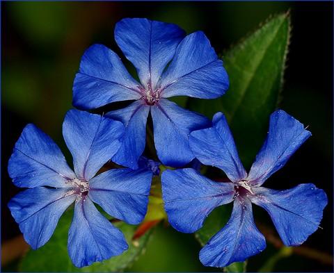 Blue Threesome 1