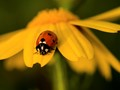 I just love Seven Spot Ladybirds