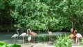 Flamingos Zoo Hellabrunn Munich Germany