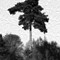Oriental tree 2