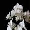 LR3_orchidee-0587