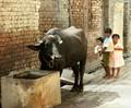 Inquisitive in Punjab