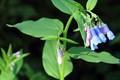 July mountain flowers