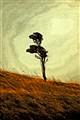 Lone tree at Portobello