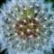 20120414-bubble flower stars