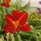 flowerthread611