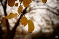 a branch with some dying leaves highlighted by the shallow depth of field