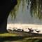 Jezioro Nowogardzkie o Poranku [Październik 10] 043ccc
