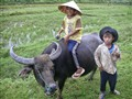 Boys & Water Buffalo