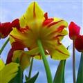 under-flower