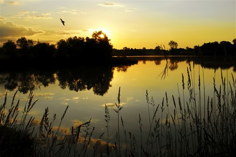 Ellis Pond at Dawn
