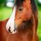 horsey_DPREV