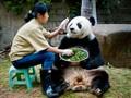 panda keeper
