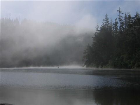 Morning Fog in Cove