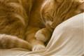 Beige & Ginger