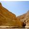 Desert Dasis