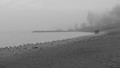 A Foggy day down by the Lake