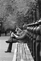 The reader, Central Park NY