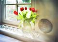 Tulips & La Lune