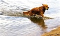 dog/water
