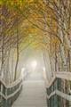 nice pathway in fog, nova scotia