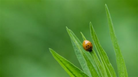 Ladybug - 16x9