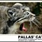 PALLAS' CAT FOR DPREVIEW MAGNIFICIENT MAMALS OCT 2015 wmkd