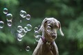 Dog and bubbles