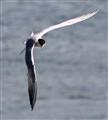 As the tern turns.
