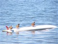 Ducks Can't Surf Properly