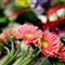 blogphotosgerber-daisies-bunched-5390 (1)