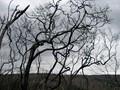 The Burnt Landscape