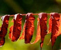 Waning Days of Autumn