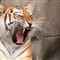 '10_Zoo Safari_91_2