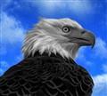 America's Bird