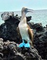 From the Galapagos Islands