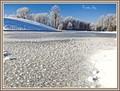 A frosty day