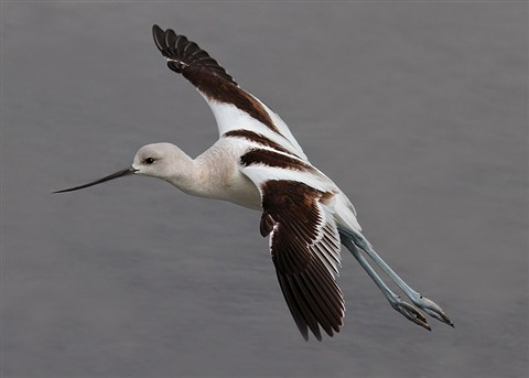 phillip AvocetFlight catchlight